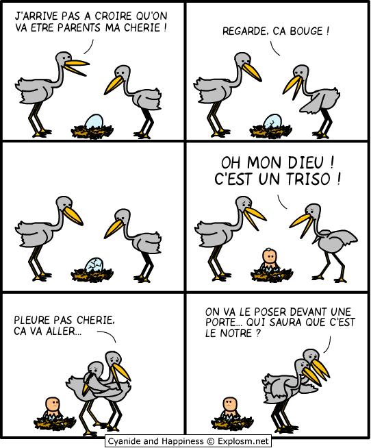 triso oiseau cyanide