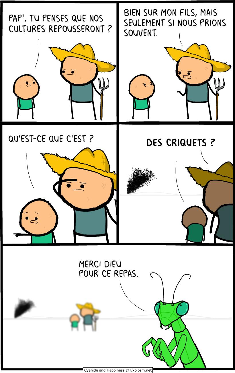 criquets dieu cyanide